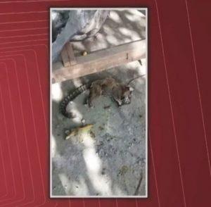 Esses já haviam sido encontrados mortos semana passada próximo a residência na zona rural.