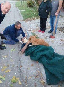 Argentina: cão foi