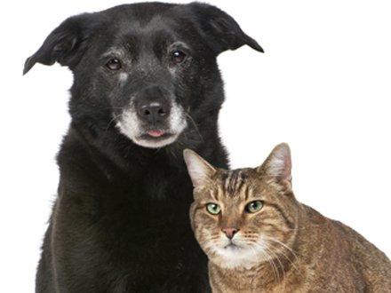 cachorro_gato_velho2