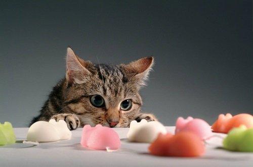 cuidar-gatos